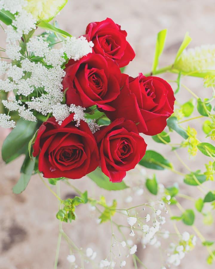 フラントリーブの花4